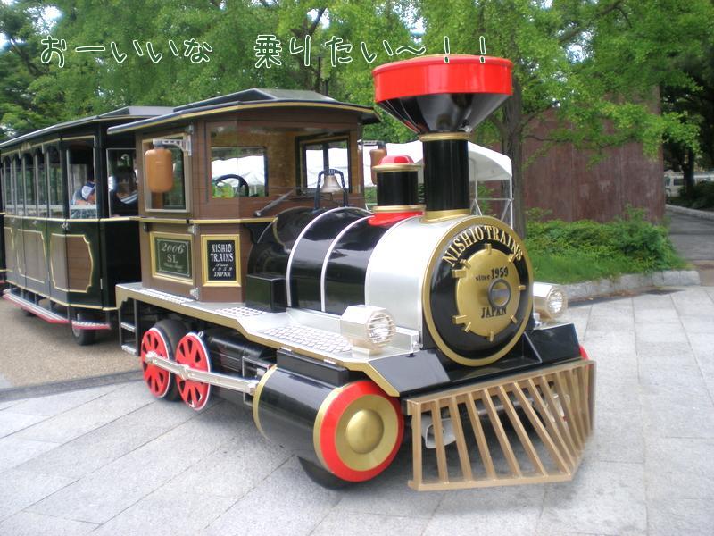 P62800231